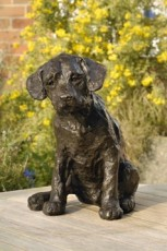 Curiosity Labrador Pup
