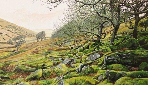 Wistmans Wood - Marc Farrell