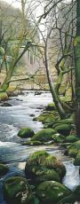 Stepping stones, Badger Holt Dartmoor - Marc Farrell