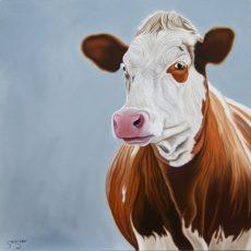Steve Shaw cow