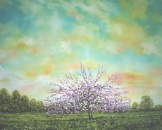 Falling Blossom, Dawn, Oil on Panel, 67cm x 53cm.£1100