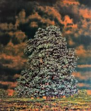Specter, Horse Chestnut at Shaftsbury Vale. Oil, Mixed media, 98cm x 120cm.£2850