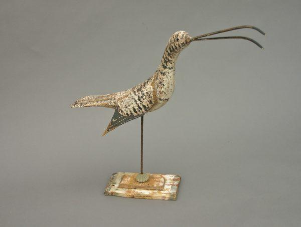 Calling shore bird
