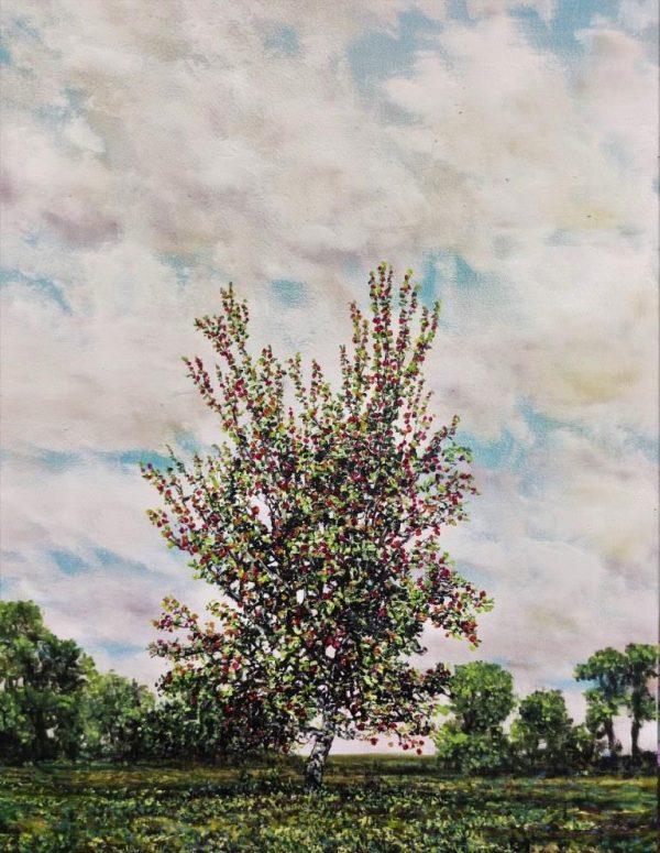Grenadier, Apple, Oil on Panel, 32cm x 42cm.