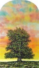 chancellor oak 102 x 61