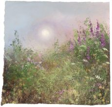 Evening-Light-and-Foxgloves-Little-Datmouth...oil-on-paper...21-x-21cm