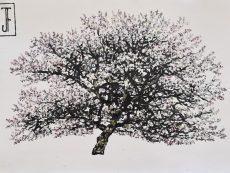 Jack Frame Blossom Sketch 2 on paper 32 x 24