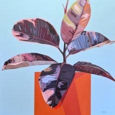Ficus Elastica Big Orange