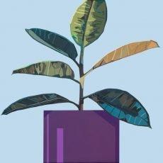 Ficus_6 Leaves_Purple Pot(60x60cm)